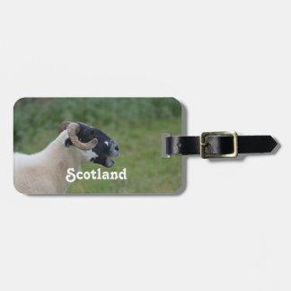 Highland Sheep Travel Bag Tag