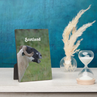 Highland Sheep Photo Plaque