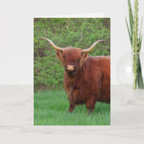 Highland Steer Father's Day Card