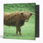 Highland Steer, Island of Mull, Inner Binder