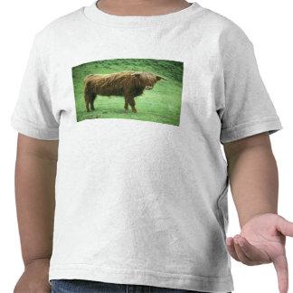 Highland Steer, Island of Mull, Inner Tshirts