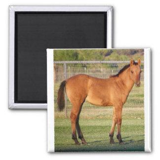 Highway 93 Horse Magnet