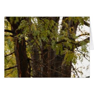 Higlands Park Tree Trunk Card
