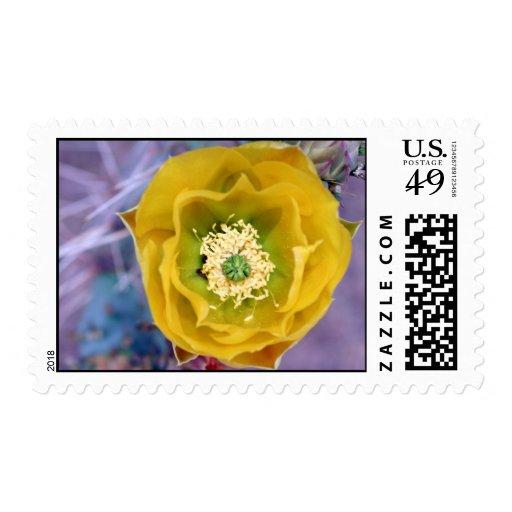 Higo chumbo en sellos de la floración