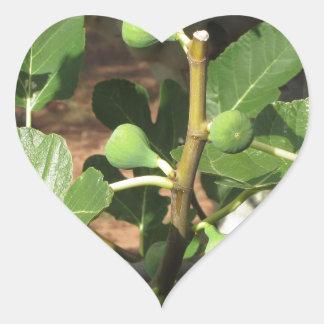 Higos verdes que maduran en una higuera pegatina en forma de corazón