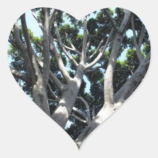 Higuera vieja pegatina en forma de corazón