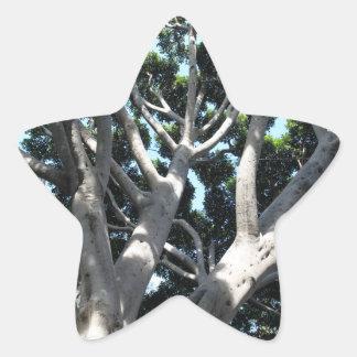 Higuera vieja pegatina en forma de estrella