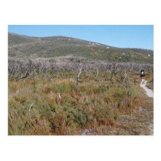 Hiker Postcard