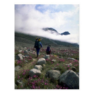 Hikers in Auyuittuq National Park, NWT, Canada Postcard