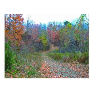 Hiking Deep Into The Woods Postcard