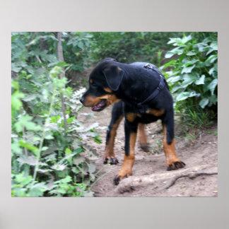 Hiking Puppy Rottweiler Dog Poster