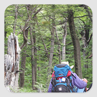 Hiking through trees, Torres del Paine Park, Chile Square Sticker