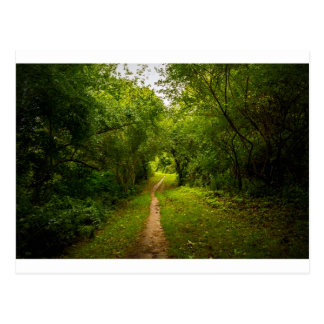 Hiking trail through the woods postcard