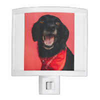 Hilarious Black Lab on Red Background Smile Night Light