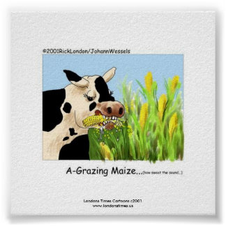 """Hilarious Cow Framed Print """"A-Grazin' Maize"""" Posters"""