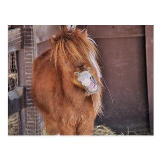 Hilarious Horsey Postcard