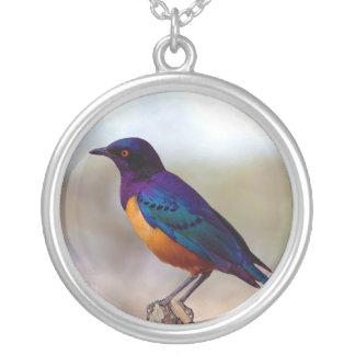 Hildebrandt's Starling Lamprotornis Hildebrandti Silver Plated Necklace