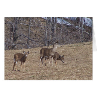 HILL DEER, SOUTH WOODSTOCK VERMONT CARD