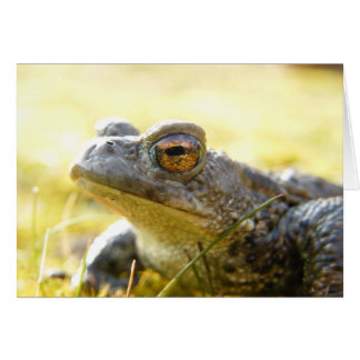 Hill End Toad Card