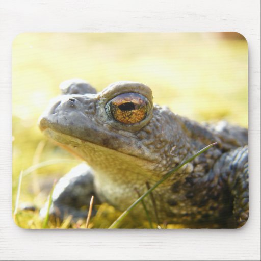 Hill End Toad Mouse Mat
