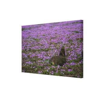 Hills of Lachay Canvas Print