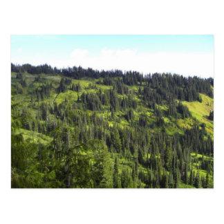 Hills of Trees Postcard