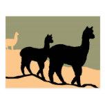 Hillside Alpacas Postcard