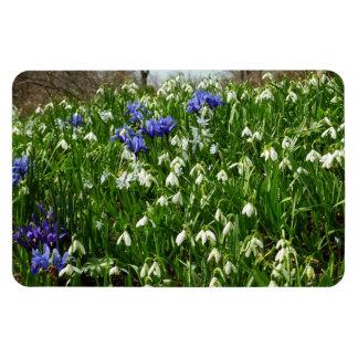 Hillside of Early Spring Flowers I Magnet