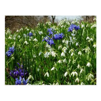 Hillside of Early Spring Flowers I Postcard