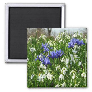 Hillside of Early Spring Flowers Magnet 2 Inch Square Magnet