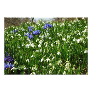 Hillside of Early Spring Flowers Photo Print