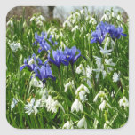 Hillside of Early Spring Flowers Square Sticker