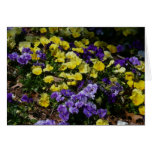 Hillside of Purple and Yellow Pansies Card