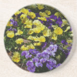 Hillside of Purple and Yellow Pansies Coaster