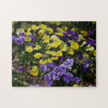 Hillside of Purple and Yellow Pansies Jigsaw Puzzle
