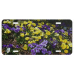 Hillside of Purple and Yellow Pansies License Plate