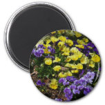 Hillside of Purple and Yellow Pansies Magnet