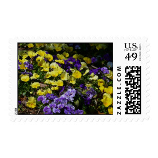 Hillside of Purple and Yellow Pansies Postage