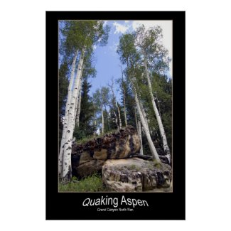 Hillside Quaking Aspen & Unearthed Boulders Poster