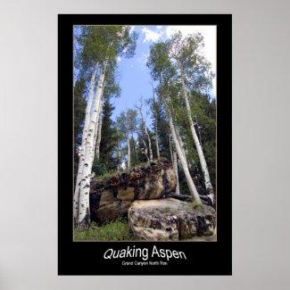 Hillside Quaking Aspen & Unearthed Boulders Poster