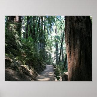 """""""Hillside Trail"""", Muir Woods Poster"""