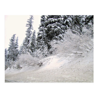 Hillside with pine trees covered with snow postcard