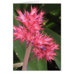Hilo Hawaii Tropical Flowers - You can customize Greeting Card