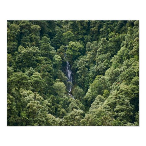 Himalaya forest in the Mangdue valley, Bhutan Poster