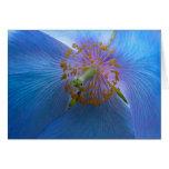 Himalayan Blue Poppy Card