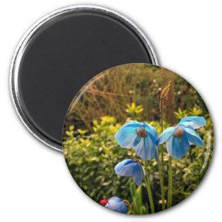himalayan blue poppy fridge magnets
