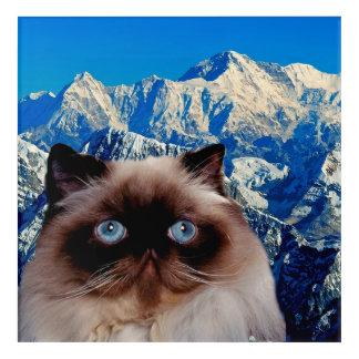 Himalayan Cat Acrylic Print