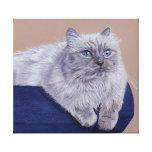 Himalayan Cat Art Stretched Canvas Print