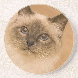 Himalayan Cat Coaster
