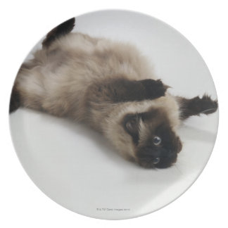 Himalayan Cat Lying on his Back Dinner Plate